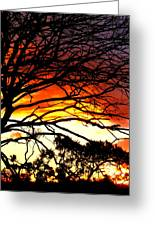 Sunset Tree Silhouette Greeting Card