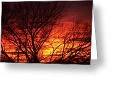 Sunset Tree Greeting Card