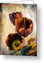 Sunset Tulips Greeting Card