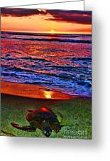 Sunset Turtle By Diana Sainz Greeting Card