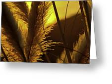 Sunset With Reeds Greeting Card