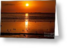 Sunset With The Birds Photo Greeting Card