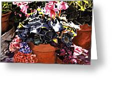Sunshine And Flowerpots Greeting Card