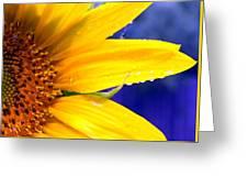Sunshine Blue Greeting Card