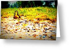 Sunshine Butterfly Greeting Card