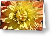 Sunshine Dahlia Greeting Card