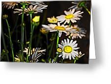 Sunshine Daisies Butter Mellow Greeting Card