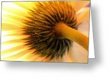Sunshine Daisy Greeting Card