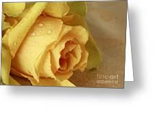 Sunshine Delight Yellow Rose Greeting Card