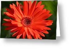 Sunshine Gerber Greeting Card