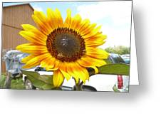 Sunshine In Country Farm Greeting Card