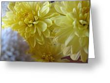 flower - Sunshine in Petals Greeting Card