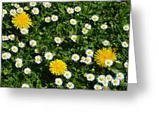 Sunshine In The Daisies Greeting Card