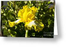 Sunshine Iris Greeting Card
