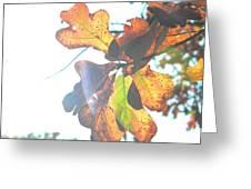 Sunshine Leaves Greeting Card