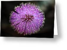 Sunshine Mimosa Greeting Card