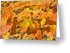 Sunshine Of Fall Greeting Card