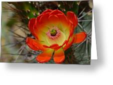 Sunshine Greeting Card by Old Pueblo Photography