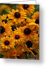Sunshine On A Stem Greeting Card