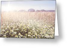 Sunshine Over The Fields Greeting Card