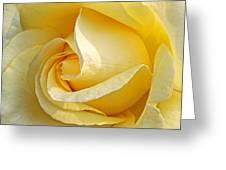 Sunshine Rose Greeting Card