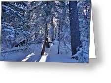 Sunshine Through Winter Trees Greeting Card