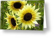 Sunshine Trio Greeting Card
