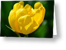 Sunshine Tulip Greeting Card