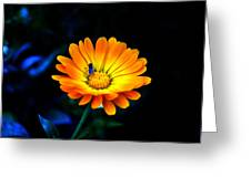 Sunshine- Viator's Agonism Greeting Card by Vijinder Singh