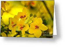 Sunshine Yellow Greeting Card