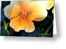 Sunshine Yellow Pansy Greeting Card