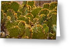 Super Cacti Greeting Card