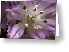 Super Close Up Of A Chive Flower Greeting Card