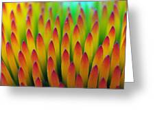 Super Macro Of Echinacea Cone Flower Greeting Card
