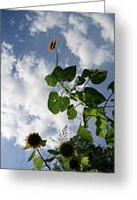 Super Sunflower Greeting Card