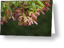 Super Sweet Winged Maple Seeds Greeting Card