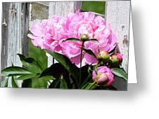 Supporting Peony Greeting Card