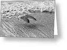 Surf And Wings Greeting Card