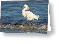Surf Egret Greeting Card