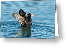 Surf Scotter Male Wings Greeting Card