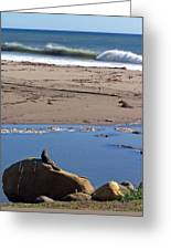 Surf Watching Squirrel Greeting Card