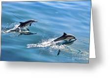 Surfing The Wake Greeting Card