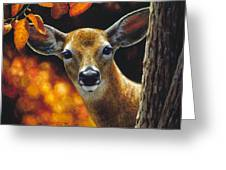 Whitetail Deer - Surprise Greeting Card by Crista Forest