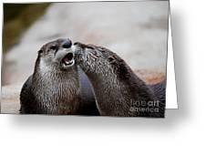 Surprise Kiss Greeting Card