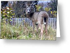 Surprised Deer Greeting Card