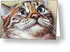 Surprised Kitty Greeting Card by Olga Shvartsur