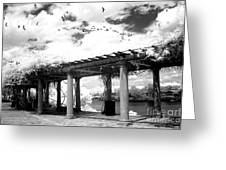 Surreal Augusta Georgia Black And White Infrared  - Riverwalk River Front Park Garden   Greeting Card