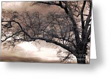 Surreal Fantasy Gothic South Carolina Oak Trees Greeting Card by Kathy Fornal
