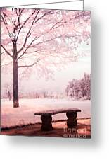 Surreal Infrared Dreamy Pink And White Park Bench Tree Nature Landscape Greeting Card