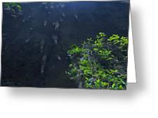 Surreal Stalactites At The Camuy Caverns Greeting Card